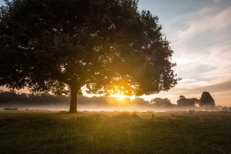 Richmond Park Simon Wilkes Unsplash